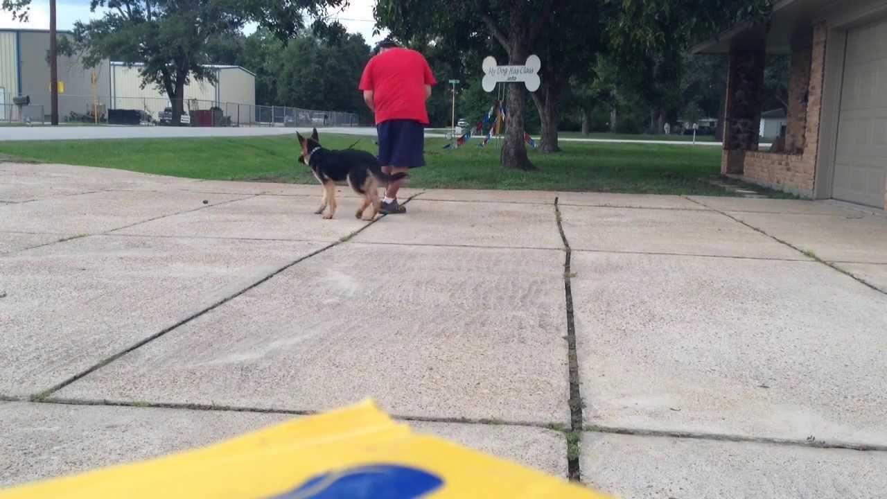 Affordable Dog Training 281-536-1278