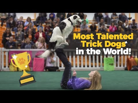 Most Talented Dogs show their tricks - Can your dog do this?