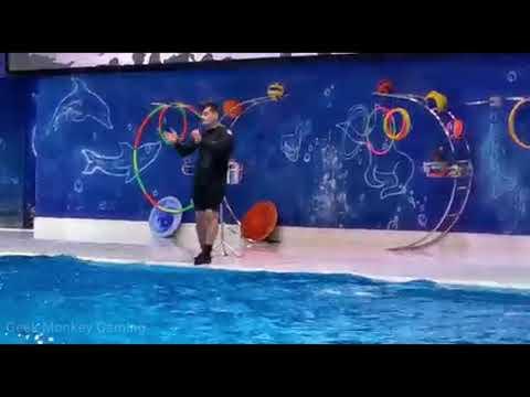 Dolphin Show, Dubai | Dolphin Show at Dubai Dolphinarium | Best of Dubai Dolphin Show