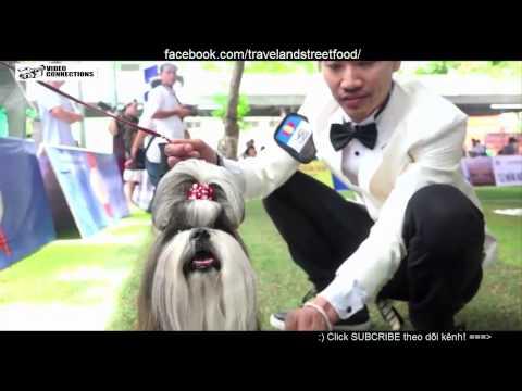 xem cuộc thi của hơn 40 loài chó đẹp tranh tài ở Sài Gòn