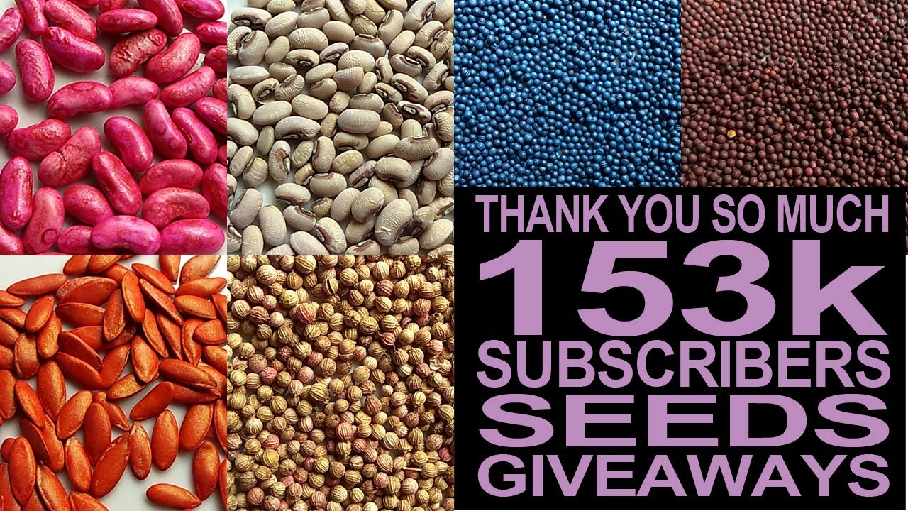 153K Subscribers I Thank You So Much I Seeds Giveaways