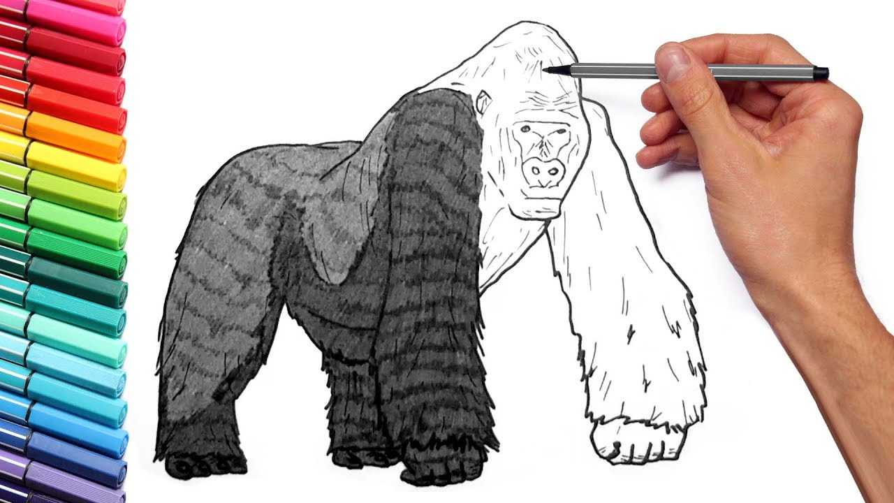 drawing and coloring a gorilla how to draw wild animals color pages for children youtube. Black Bedroom Furniture Sets. Home Design Ideas