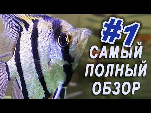 Москвариум ВДНХ видео обзор /Экскурсия в Московский океанариум /Аквариум в Москве на ВВЦ обитатели