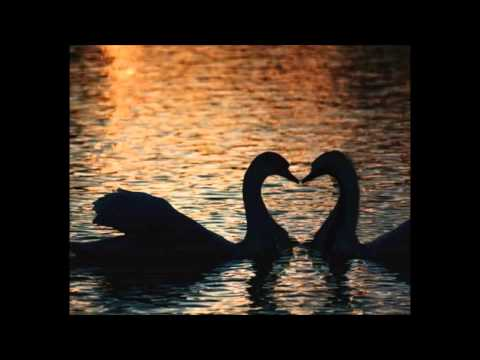 DJ Sammy ~ Look For Love ~ Lyrics