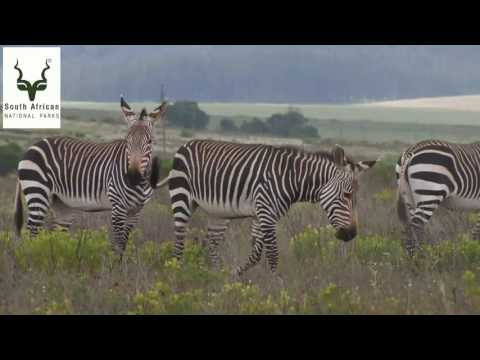 South African National Parks... more than meets the eye...