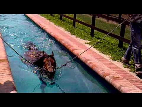 Renegado en youtube for Piscina el espinillo