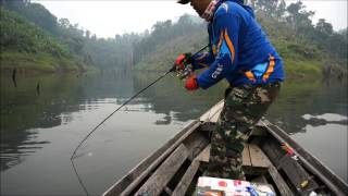 giant snakehead fishing in Indonesia