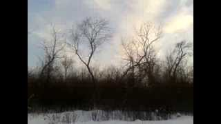 птиц что-то много в кустах(, 2014-02-27T18:03:41.000Z)