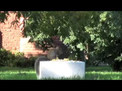 Minneapolis Institute of Art Squirrels