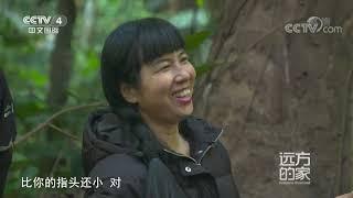 [远方的家]云南铜壁关自然保护区 热带雨林的标志物种:阿萨姆娑罗双| CCTV中文国际 - YouTube