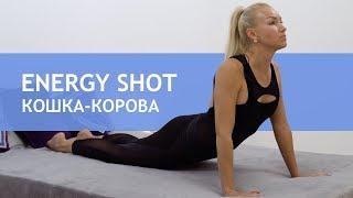 Йога в постели ◎ Кобра ◦ Кошка-корова ◎ ДЕНЬ 3
