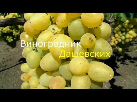 Виноград Супер экстра (2017)