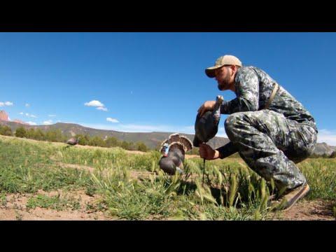 Utah Turkey Hunting