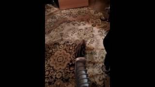Мраморная кошка Няшка