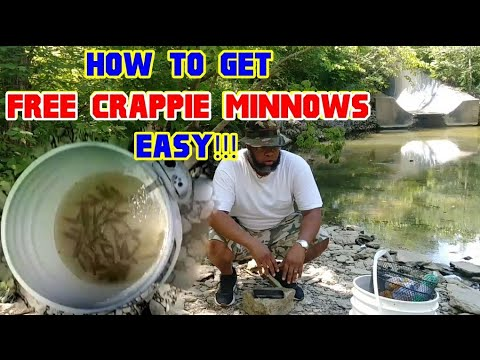 How to get FREE CRAPPIE MINNOWS...Easy!!! (everything you need to know) Crappie Town USA Baby