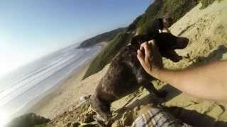 German Short Haired Pointer On Go Pro 3