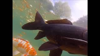 Водоем для декоративной рыбы 200м3