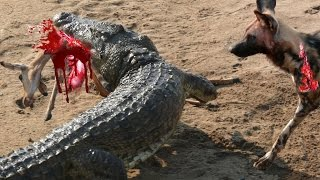 most amazing wild animal attacks 6 leopard vs baboon crocodile anaconda deer