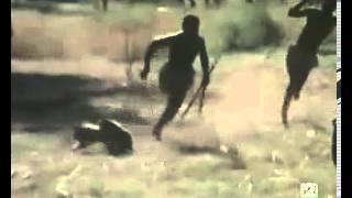 Cazando jabalíes con babuinos / Hunting wild boar using monkeys