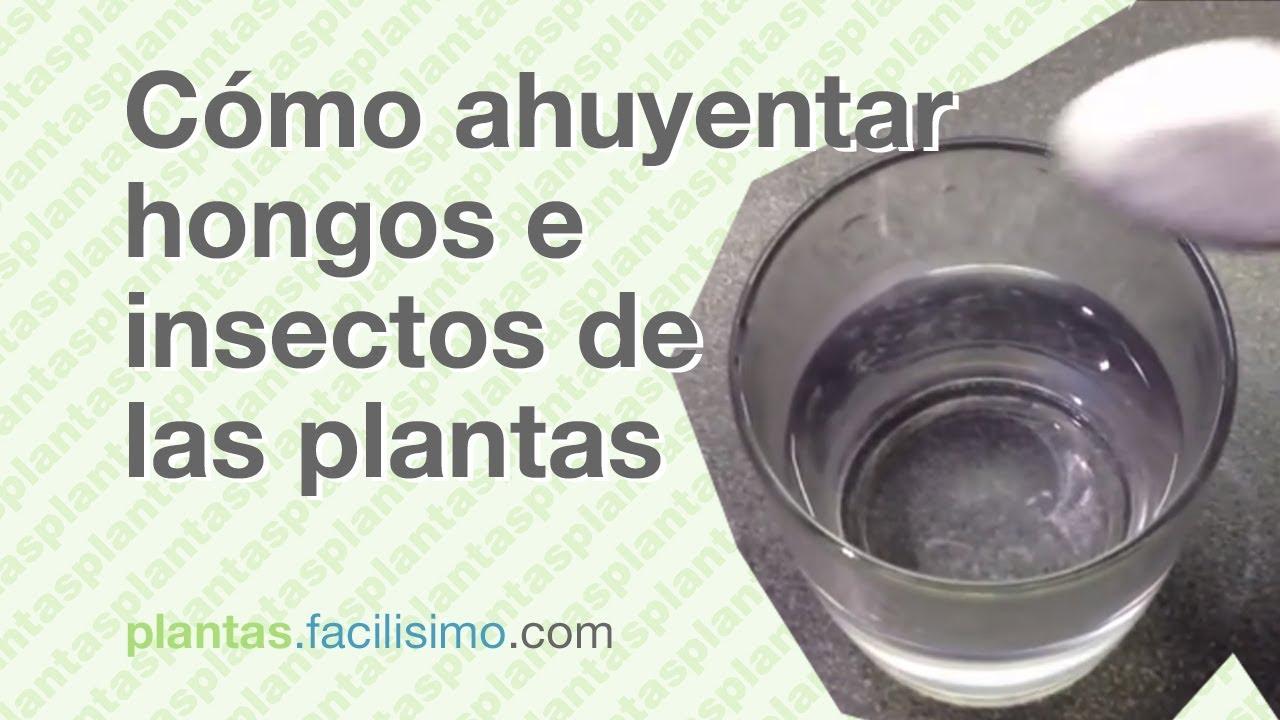 C mo ahuyentar hongos e insectos de las plantas youtube - Como ahuyentar mosquitos ...