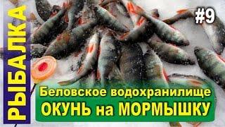 Ловля окуня зимой на мормышку. Зимняя рыбалка в Сибири. Беловское водохранилище, Поморцево..