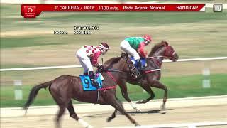 Vidéo de la course PMU NICOLLO HANDICAP