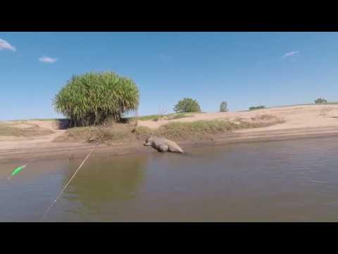 Giant Crocodile Scares Fishermen in Western Australia