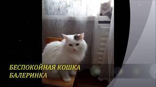 Кошка Балеринка. Беспокойная кошка . В 2018 г. 24 марта родила котят.#cat , #кошки.