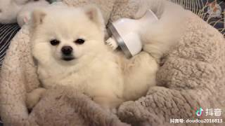 TikTok Pets  Funny and Cute Pets Compilation  | aww animals funny pets