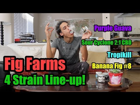 4 Strains, 1 Review - Fig Farms Mega Review!