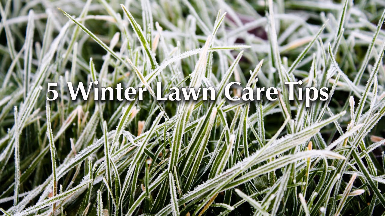 Prepare Lawn For Winter 5 winter lawn care tips - youtube