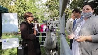 Promocja hodowli zwierząt - alpaki nowatorską inicjatywą dla gospodarstw agroturystycznych.
