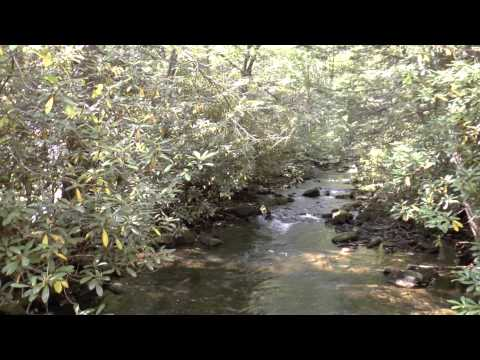 Hunting Camp For Sale In Union County PA On State Land