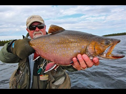 Minipi Giant Brook Trout | Labrador