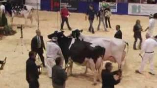 Expo-Printemps Holstein Québec 2009 : Championnat senior noir et blanc