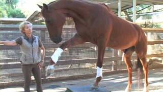 Lukas - The World's Smartest Horse - 2009 Update Part 3 of 5