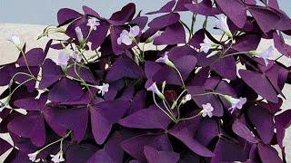 8 Plantas Encantadoras A Primeira Vista