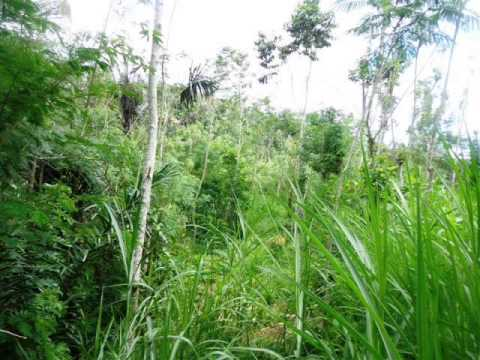 Land for sale in Ubud Bali untouched, natural and beautiful -- LUB167