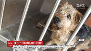 У Львові відкрили Центр всиновлення безпритульних тварин