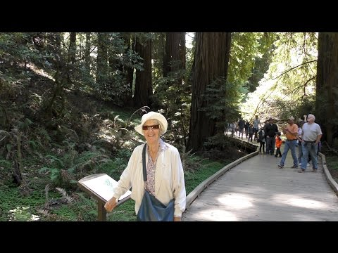 STROLLING AMONG REDWOODS AND DEAD WOODS AT MUIR WOODS NATIONAL MONUMENT