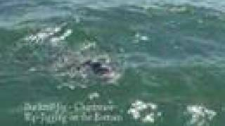 How to Catch Huge Black Sea Bass -Saltwater Sea Bass Fishing