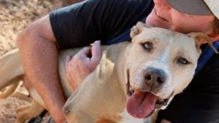 Rescued Dogs From Michael Vick Dogfighting Ring Make Progress