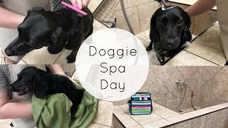 Doggie Spa Day
