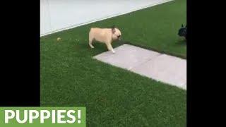 Dog has strangely unique way of expressing joy