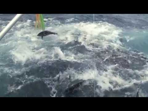 EPIC TUNA frenzy in Panama!!! Underwater footage too!!!