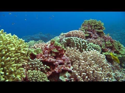 Pitcairn's Pristine Environment | Pew