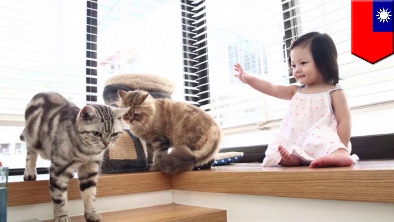 Ted Nugent Cat Scratch Fever
