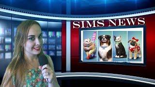 SIMS NEWS Psy i Koty & Akcesoria dla małych dzieci!