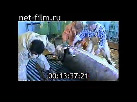 Уникальные кадры: Белуга на полтонны. Запрет на вылов осетров на Каспии. Аквакультура России