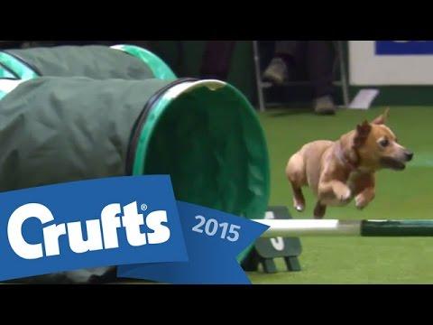 Agility - Crufts Team - Small Semi Final   Crufts 2015